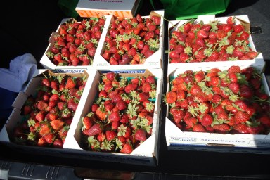 Three flats of strawberries picked at Wish Farms in Plant City, FL