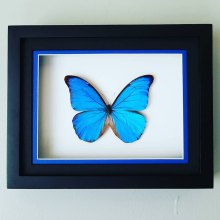 Acquainted With Butterflies - Booth 344