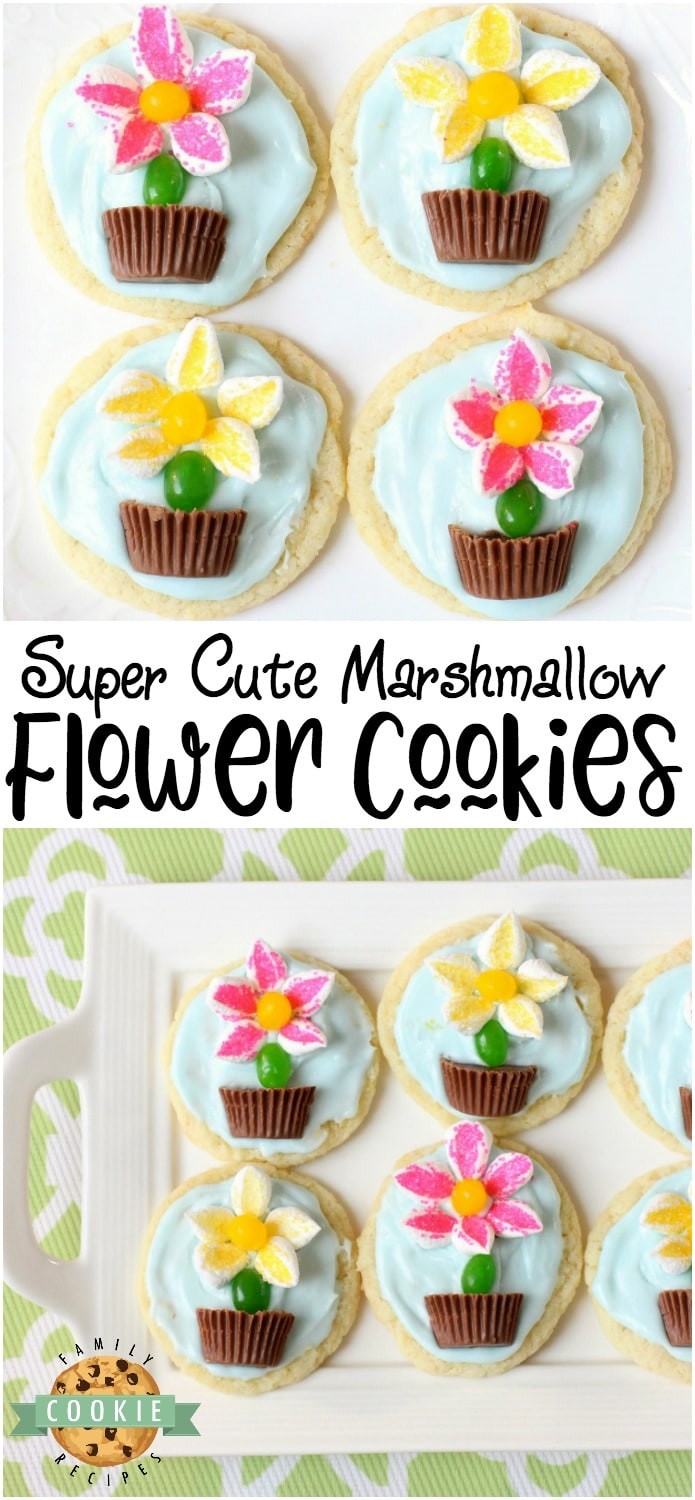 Marshmallow Flower Cookies are easy to make and perfect for Spring baking! Everyone loves these cute treats topped with marshmallow flowers with a jelly bean stem, in a chocolate pot! via @familycookierecipes