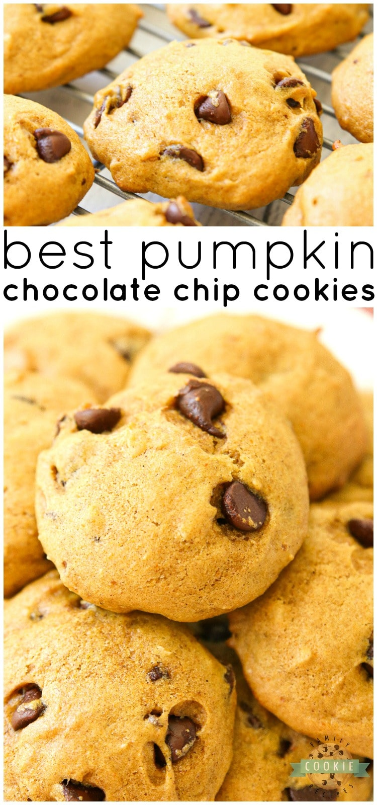 Delicious Pumpkin Chocolate Chip Cookies are incredible pillows of soft and chewy cookie goodness! Pillowy soft chocolate chip cookies straight from the oven are made even better with the addition of pumpkin. via @familycookierecipes