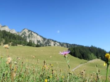 Heidi Land - On the Alp