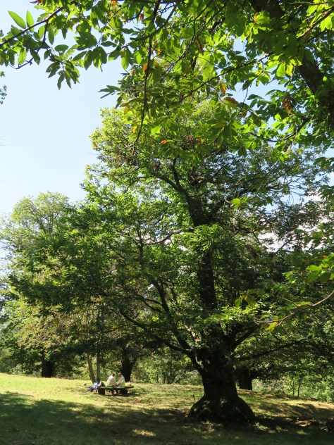 Beautiful trees providing shadow on the picnic meadow