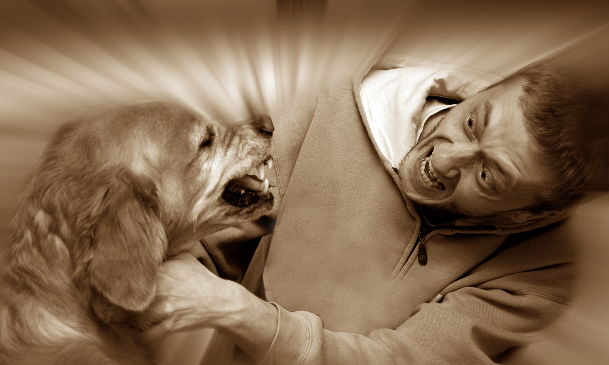 Angry dog biting his owner.