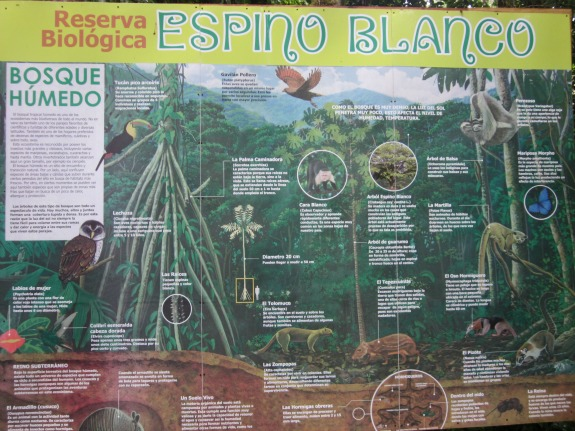 Espino Blanco Biological Reserve