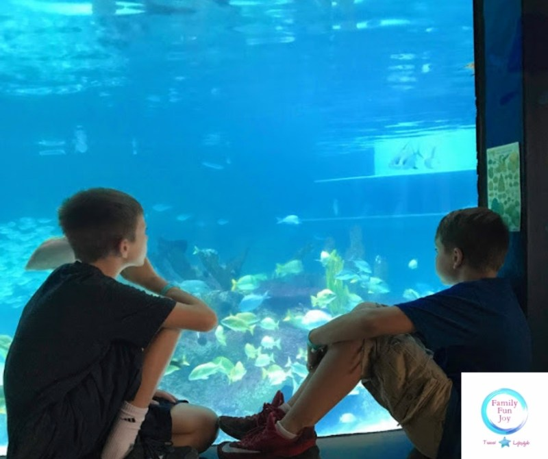 Aquarium Encounters Coral Reef Tank Boys