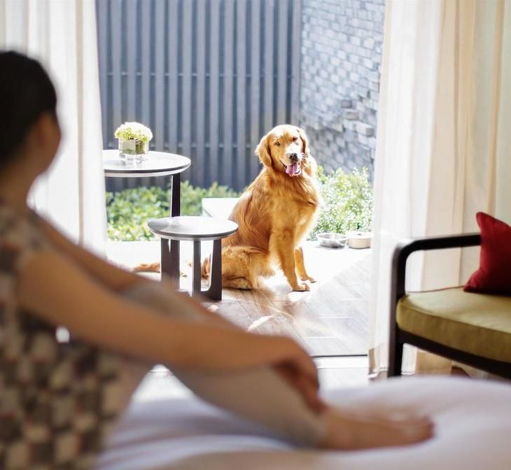 dog friendly hotel china