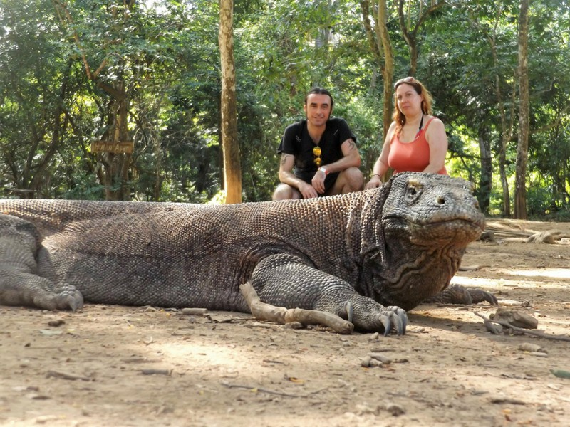 Adventures in Southeast Asia Komodo Dragons National Park