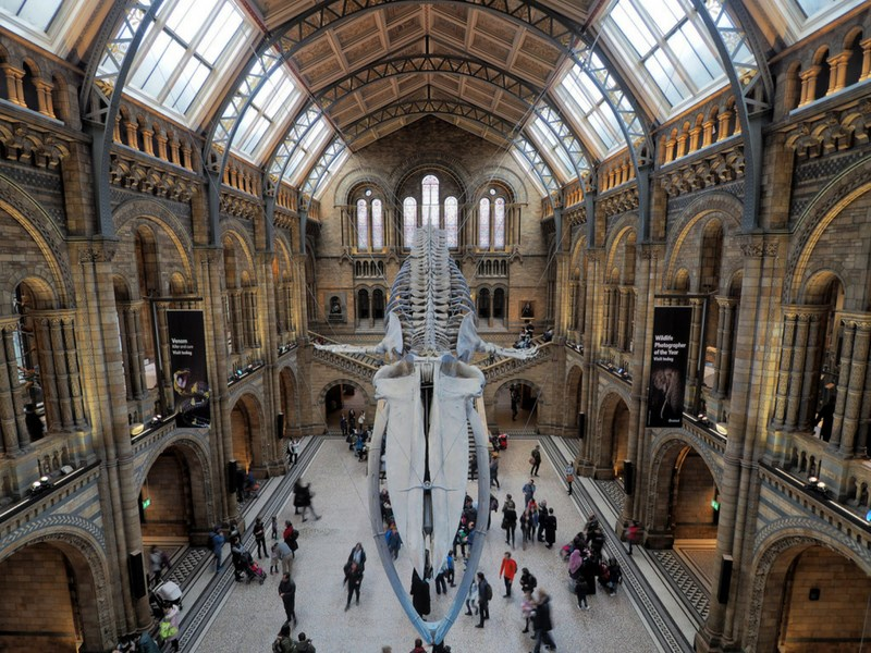 Things to do in London with kids Natural History Museum