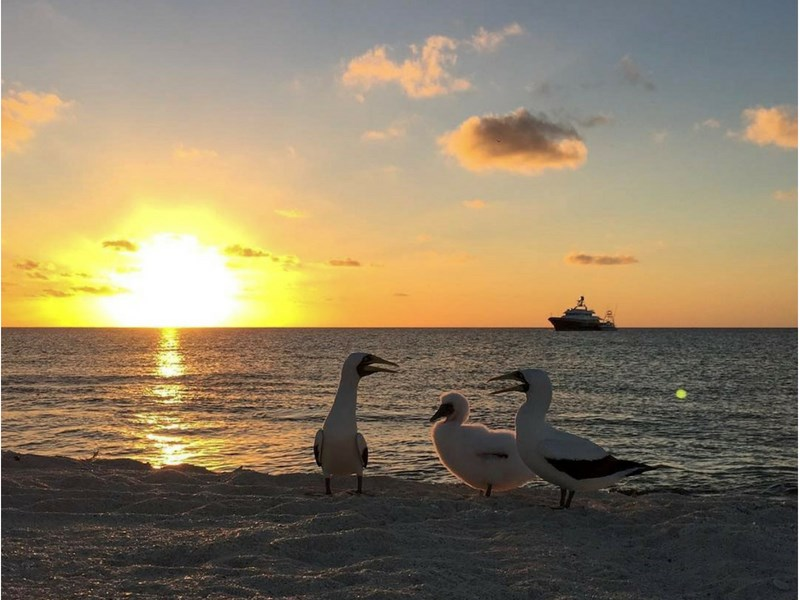 Things to Do in New Caledonia With Kids Cagou Birds