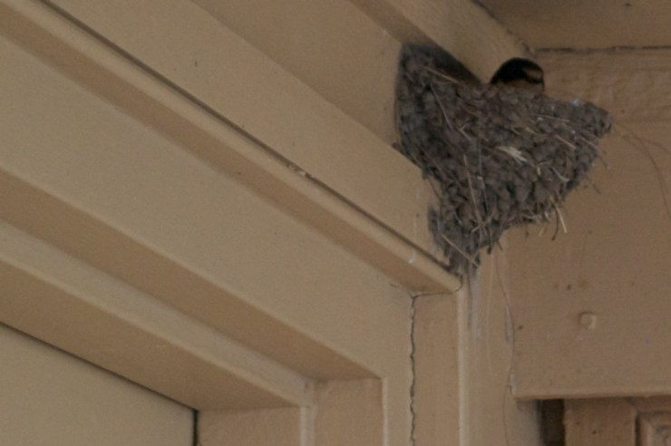 This Motel seems to welcome a broad array of fauna - i just noticed the bird's nest above my door in the morning
