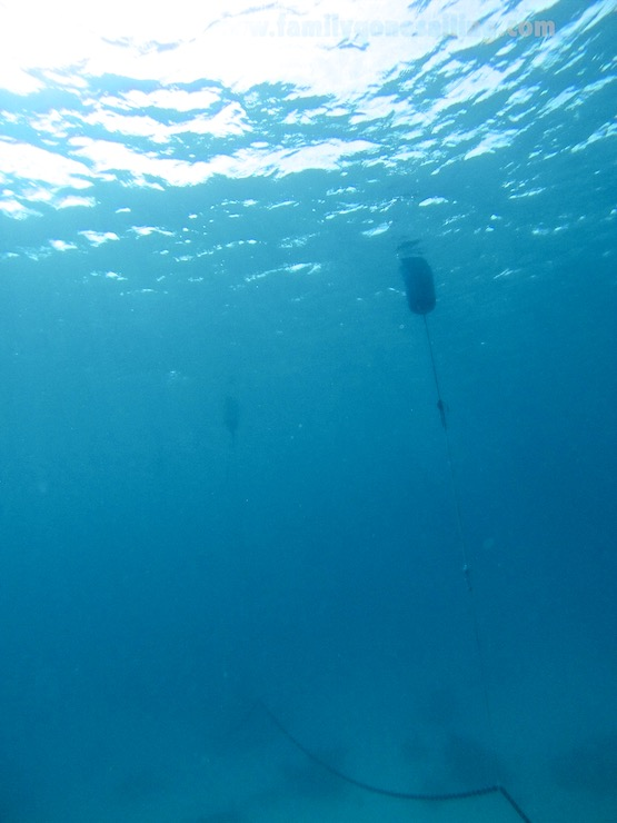 The chain floating above the coral