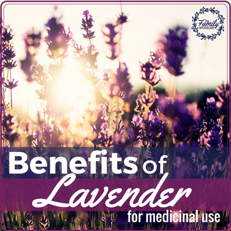 The benefits of lavender for medicinal use are incredibly varied and versatile. Lavender oil is something you always want to have on hand, find out why here... #lavender #herbalremedies #naturalremedies #realremedies #sciencebased ~ For more healthy living tips, visit TheFamilyApothecary.com