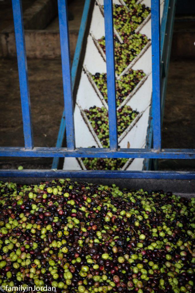 zoom olives monte
