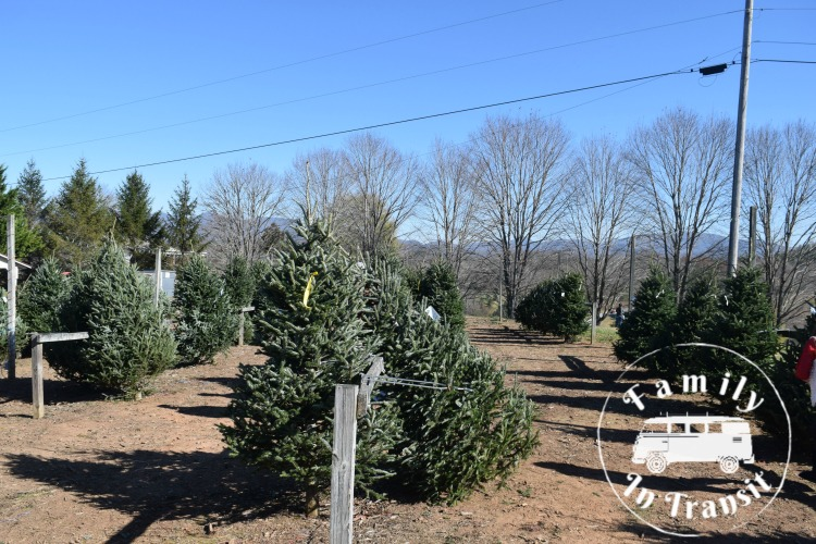 Southern Tree Plantation