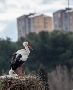 Bird's nest in custody cases