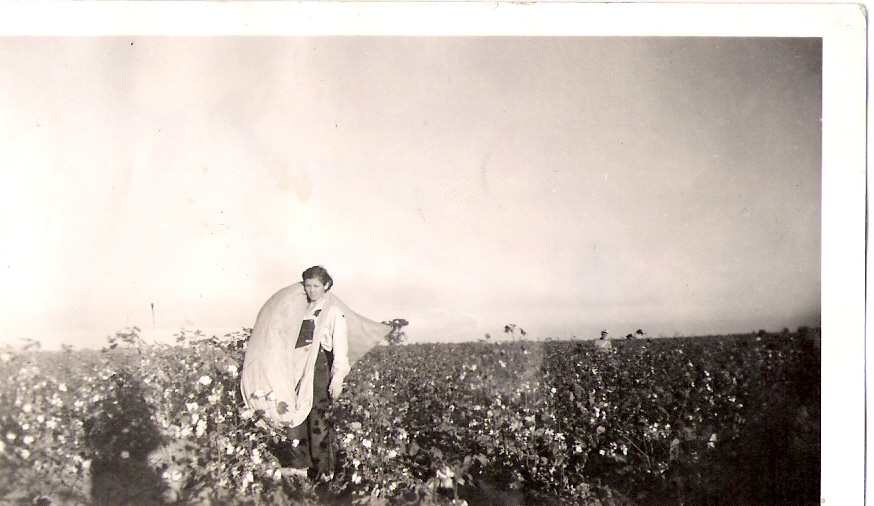 The Adventures of Cowboy Bob: Pickin' Cotton
