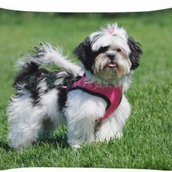 familyloves.com Shih tzu dog pillow %tag