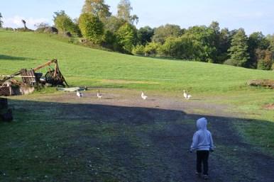 Farmyard Animals