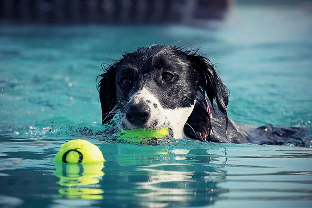 eb33b20c2af6063ed1584d05fb1d4390e277e2c818b415439df3c37daeea 640 - Fast And Easy Training Your Dog Tips And Strategies