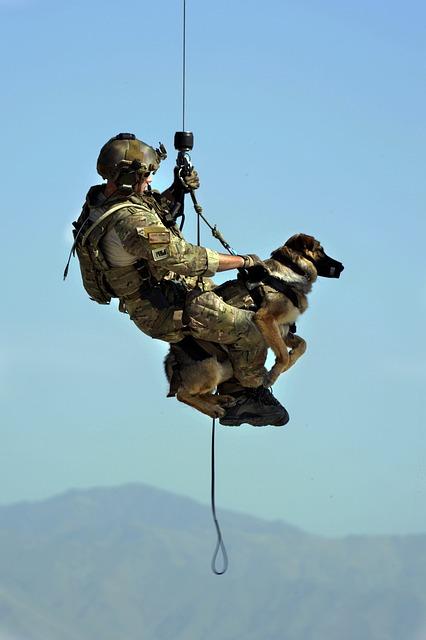 ef30b8072ff51c22d2524518b7494097e377ffd41cb5184593f3c87fa0 640 - Stupid Dog? Simple Tricks To Make Him Listen