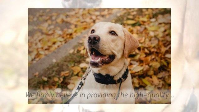 Safe Dog Training Collars -