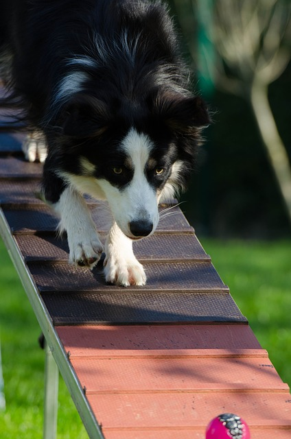 51e4d244495bb108f5d08460962d317f153fc3e456577741702b7dd19f 640 - Easy Ways To Effectively Train Your Dog