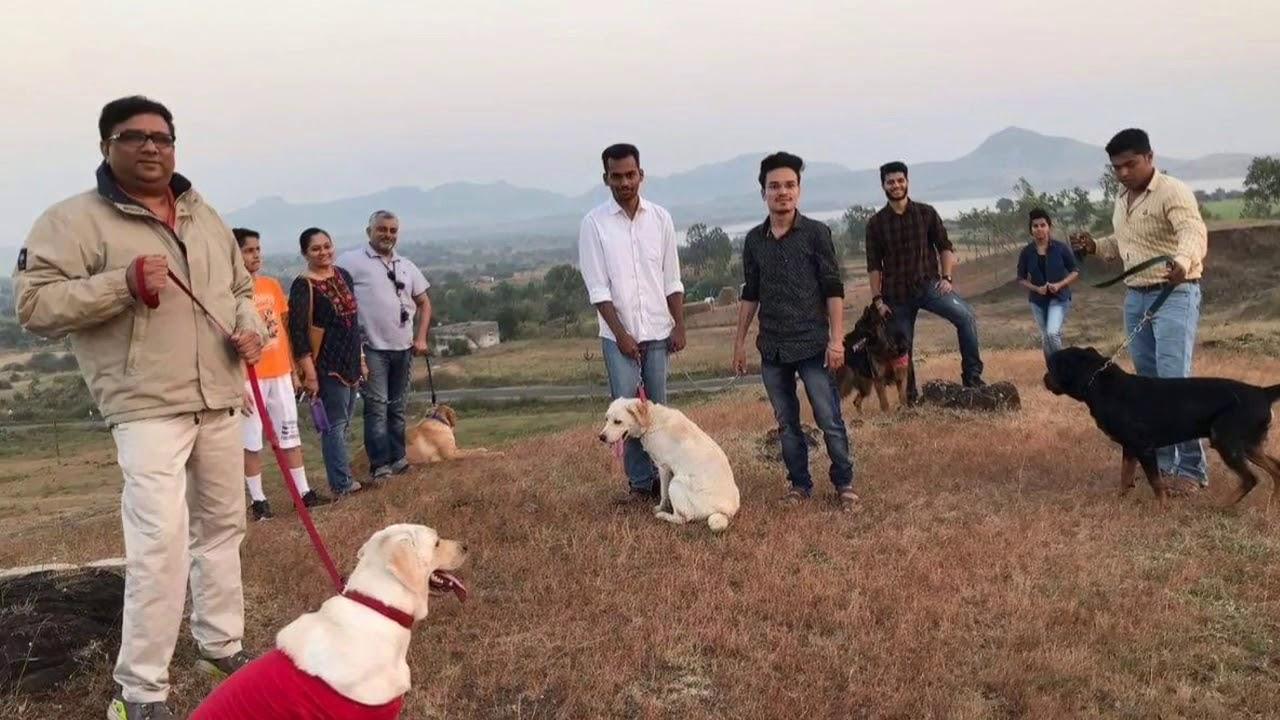 Dog Training India - Dog Training India