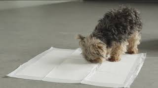Dog Training Pads For Sale - Dog Training Pads For Sale