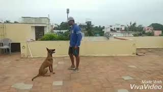 Dog training doglove dog is beautiful creature - #Dog training #doglove #dog is beautiful creature