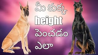 How to increase dog height in Telugu Rottweiler dog training - How to increase dog height in Telugu || Rottweiler dog training