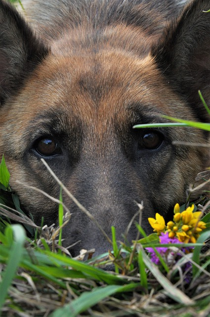52e3d1404250ad14f6da8c7dda793278143fdef85254774e732a79d2914a 640 - Training Your Dog With A Few Key Tips