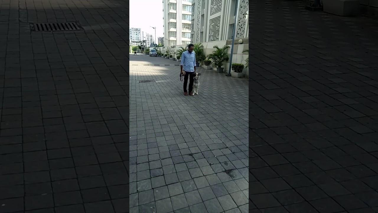 Dog training 1 - Dog training