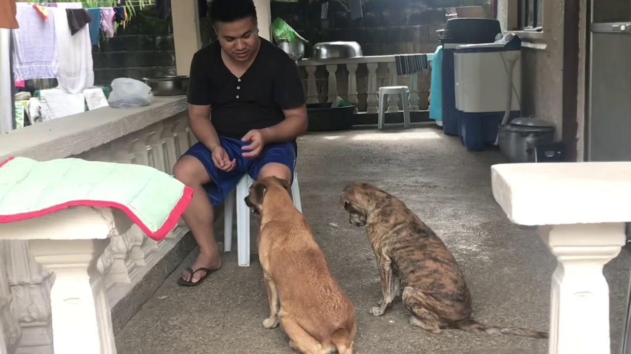 First time Dog training - First time Dog training
