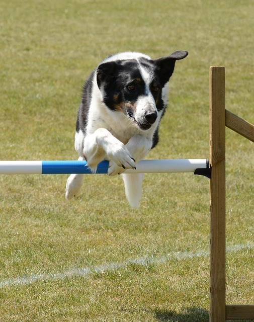 52e4d1414b50ad14f6da8c7dda793278143fdef85254764b712a73dc9348 640 - Tips And Tricks On How To Train Your Dog Correctly