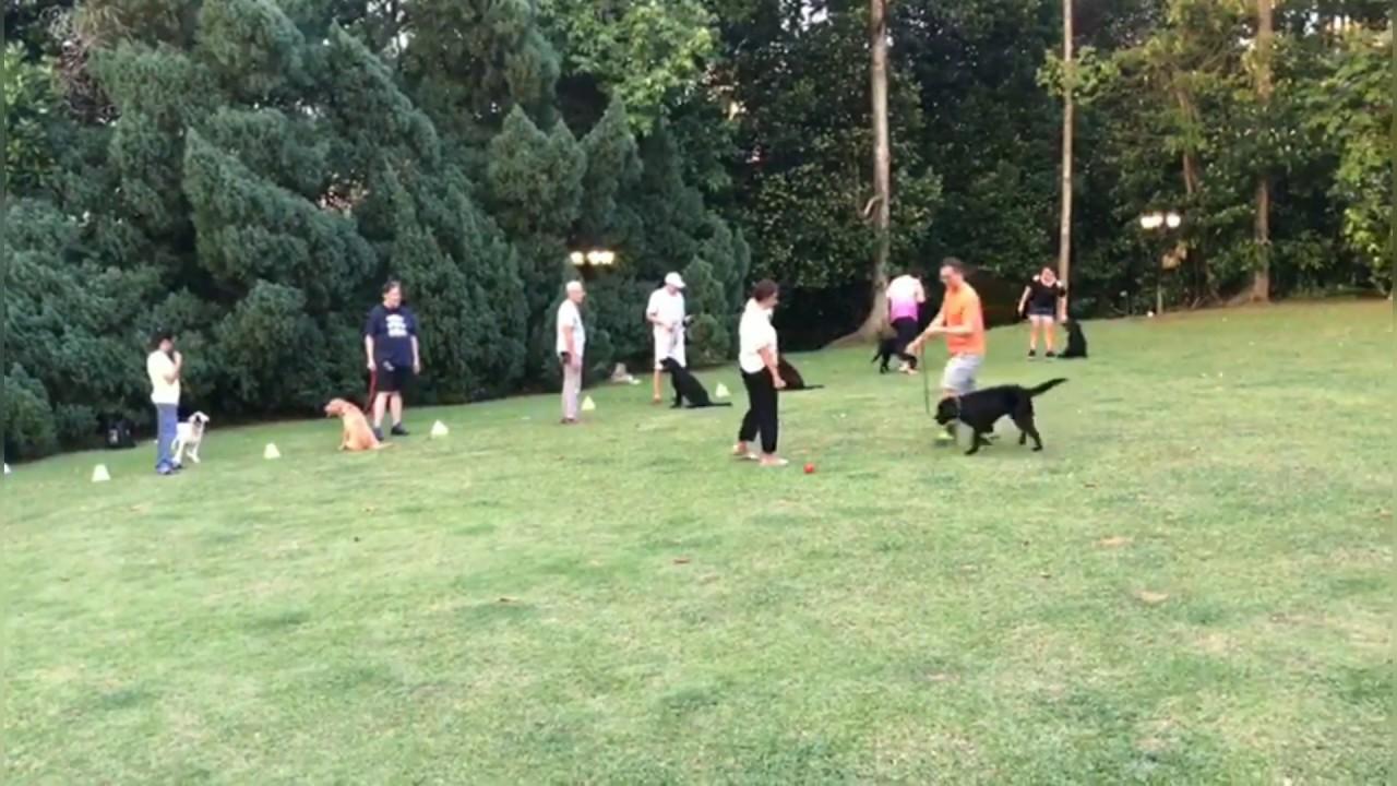 Cheer up in dog training - Cheer up in dog training