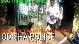 DOG TRAINING AT HOME . HOW TO DOG train in HOME - DOG TRAINING AT HOME . HOW TO DOG train in HOME
