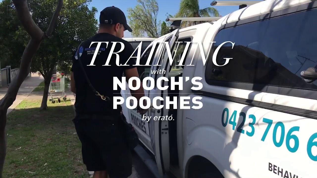 DOG TRAINING WITH PANOS - DOG TRAINING WITH PANOS