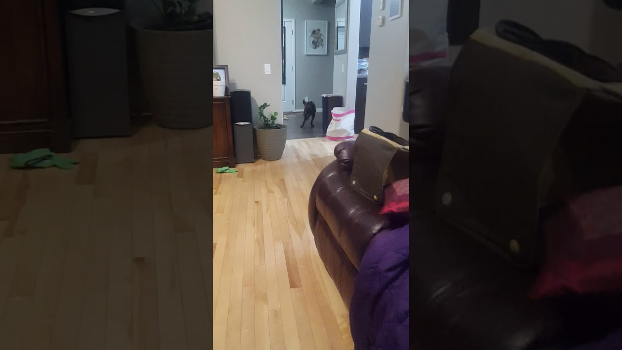 my dog training - my dog training