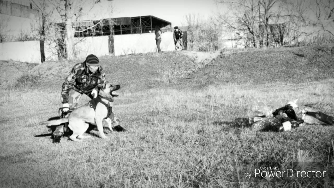 police dog training - police dog training
