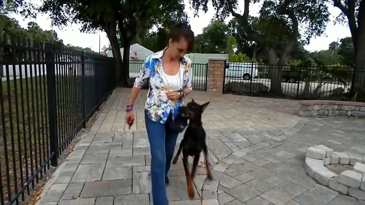 Dog training 8 - Dog training