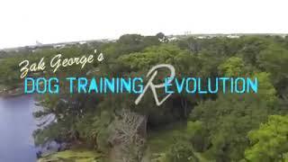 Dog training how to train any dog basics -