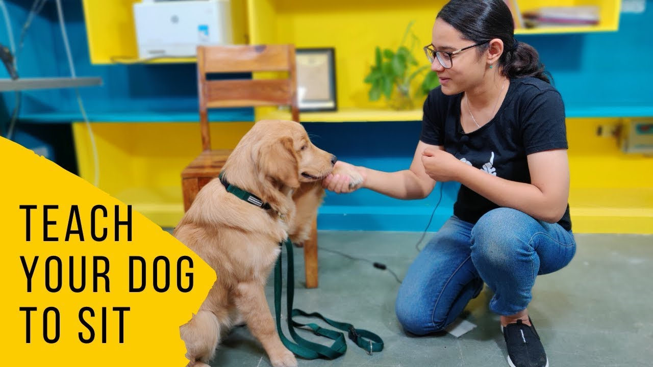 How to Train Your Dog to Sit Dog Training - How to Train Your Dog to Sit | Dog Training