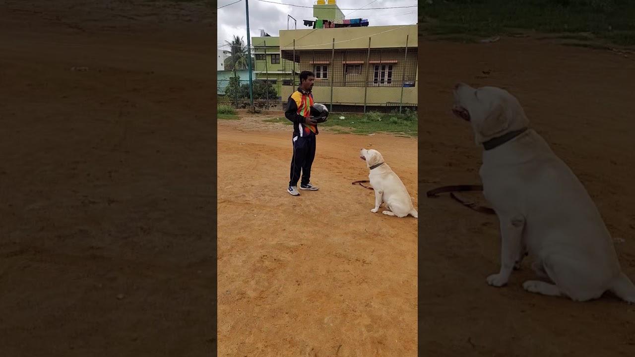 MRK Dog Training Center Bangalore - MRK Dog Training Center Bangalore