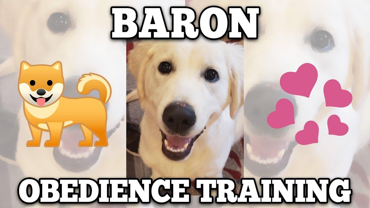 Baron Obedience Command Nora s Dog Training Company - Baron Obedience Command Nora s Dog Training Company