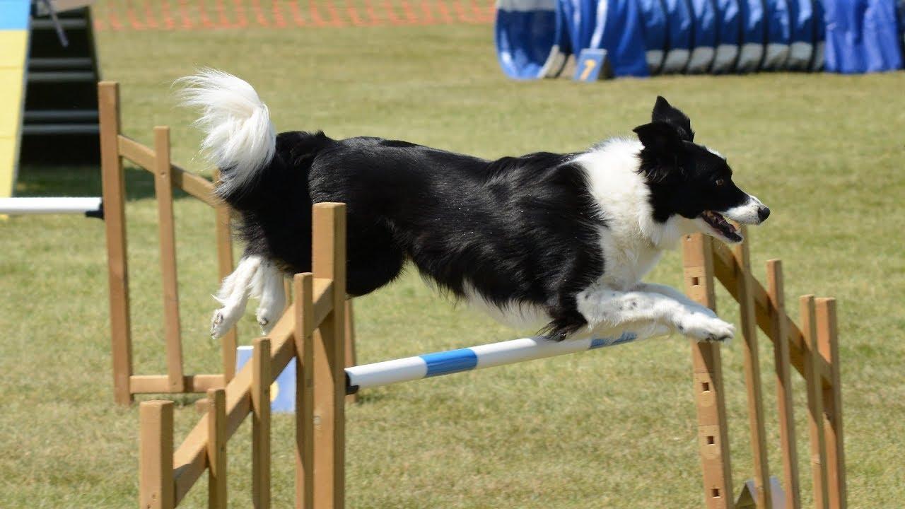 Basic dog training where to start Dog training video for any dog owner - Basic dog training, where to start? Dog training video for any dog owner