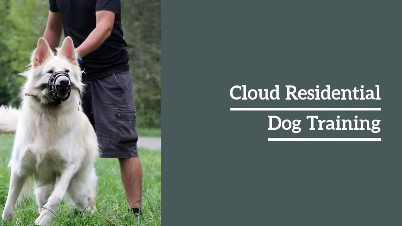 Best Dogs Training - Best Dogs  Training