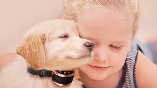 Anti Bark Dog Training Collar 1 - Anti-Bark Dog Training Collar
