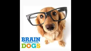 Brain Training 4 Dogs Review Now Only 47 with bonuses - Brain Training 4 Dogs Review  Now Only $47 with bonuses‎