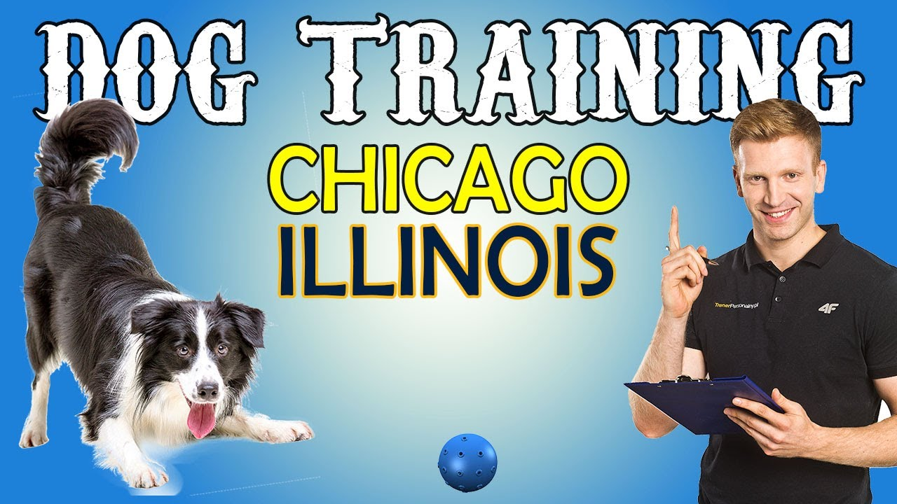 Dog Training in Chicago Illinois - Dog Training in Chicago, Illinois