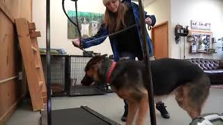 How to leash train your dog not to pull Dog training loose lead walking - How to leash train your dog not to pull + Dog training loose lead walking
